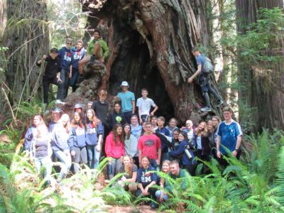 Redwoods 22