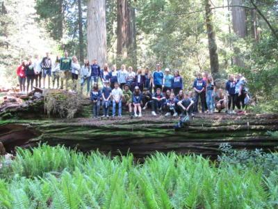 Redwoods 25